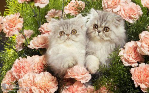 Tranh 2 Chú Mèo Con Trong Bụi Hoa Hồng