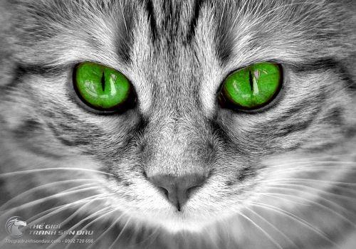 Tranh Chú Mèo Xám Ánh Mắt Xanh Là Lạ