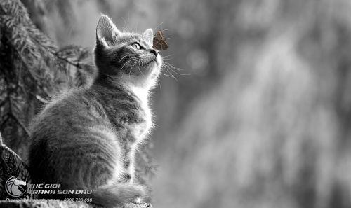 Tranh Mèo Con Và Chú Bướm Vẽ Đen Trắng