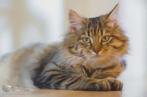 Tranh Vẽ Chú Mèo Vằn Tả Thực Khổ Lớn